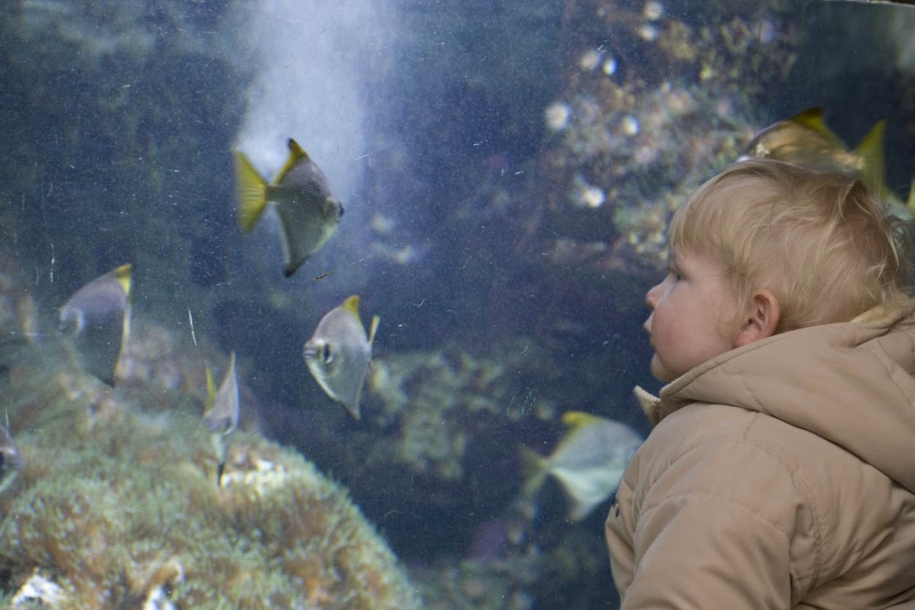 2z9p4712-zoo-aquarium